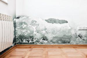 קיר עם עובש מרטיבות